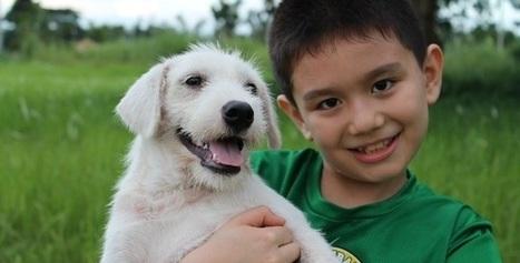 Du haut de ses 9 ans, il crée son refuge pour chiens errants | CaniCatNews-actualité | Scoop.it