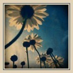iPhone Photography Exhibition: Mobile Natura   Appertunity's fun & creative iphone news   Scoop.it