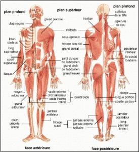 L'Anatomie en Serviette en Papier | Les tendances déco-design de Moodds | Scoop.it