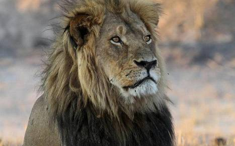 Man steals, crashes boat of hunter who killed Cecil the Lion, police say | Trophy Hunting: It's Impact on Wildlife and People | Scoop.it