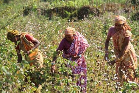 Weaving livelihood through cultivating organic cotton - The Hindu | Natural Pest Control | Scoop.it