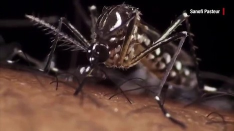 Zika virus could slam these travel hotspots | TRAVEL KEVELAIR | Scoop.it