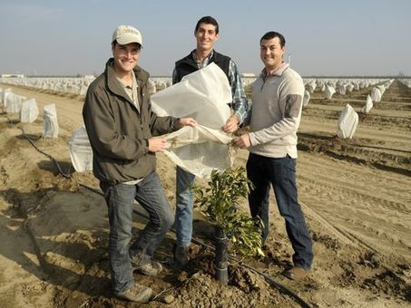 Visalia brothers' bag protects trees from frost damage - Visalia Times-Delta | Citrus Science | Scoop.it