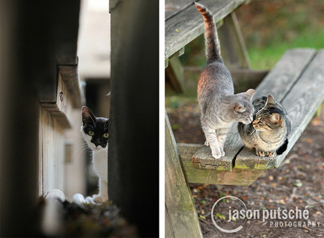 Incredible Photos Document Secret Lives Of Street Cats | Care2 Causes | Food for Pets | Scoop.it