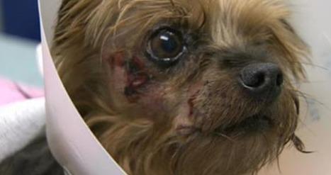 Un homme armé vole un vieux chien malade en pleine rue | CaniCatNews-actualité | Scoop.it