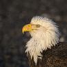 Birds in Wisconsin