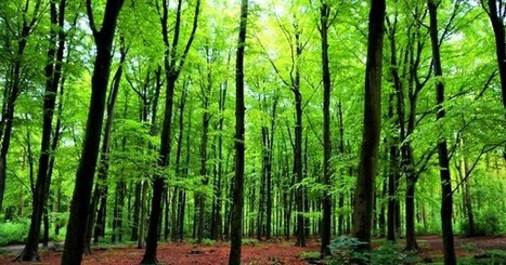 Trees talk to each other and recognize their offspring | The Landscape Café | Scoop.it