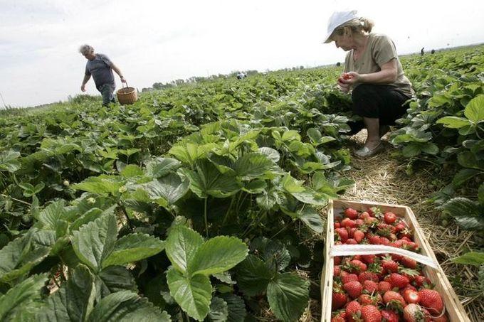 Le Covid-19 révèle la dépendance de l'agriculture à la main d'œuvre étrangère