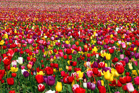 16 Colorful Photos of Fields | Everything Photographic | Scoop.it