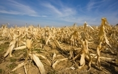 Extreme Weather May Raise Toxin Levels in Food, Scientists Warn | MAIZE | Scoop.it