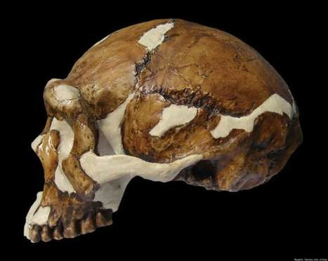 'Peking Man' Was Sophisticated & Meticulous About Clothing, Artifacts Suggest - Huffington Post | Palaeontology News | Scoop.it