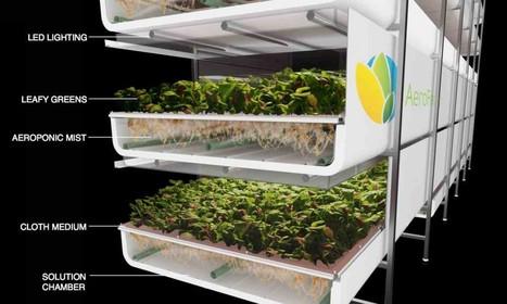 Vertical Farming in Masdar City? AeroFarms' Soil-less Solution | Vertical Farm - Food Factory | Scoop.it