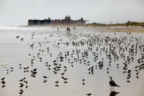 Birds Have Natural Ability to Survive Storms   100 Acre Wood   Scoop.it