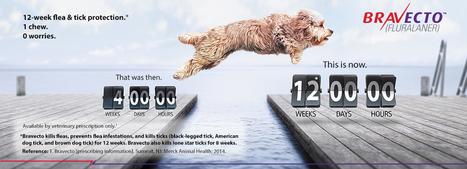 BRAVECTO: Chewable Flea & Tick Medicine | In Your Pet's Best Interest | Scoop.it