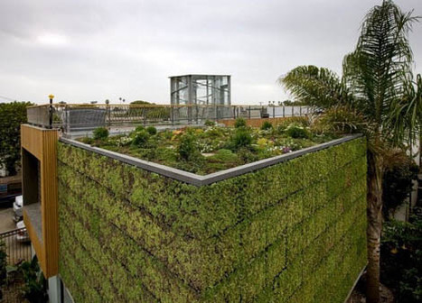 Green Building, Green Wall and Rooftop Garden for Modern Eco Homes | Ciudades sostenibles | Scoop.it