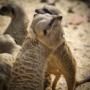Animals and empathy   Empathy and Animals   Scoop.it