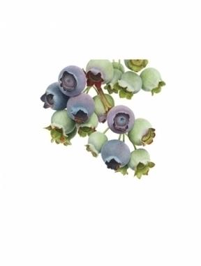 Artwork: Blueberries 'Coville' giclee print - Open House Art | Art - Crafts - Design | Scoop.it