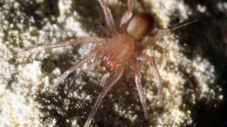 Rare spider found in Texas shuts down $15M construction project | Construction News | Info | Scoop.it