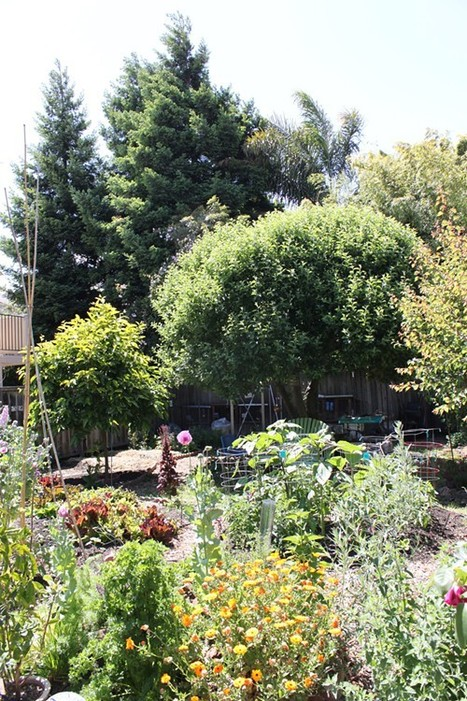 Get Inspired: Tour an Urban Farm (or Two or Six) - East Bay Express (blog) | forest gardening | Scoop.it