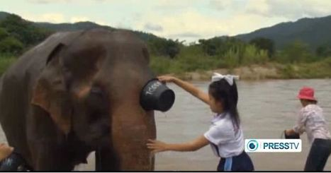 Elephants help Children with Autism in Thailand (Video!) | Fine Motor and Visual Perception | Scoop.it