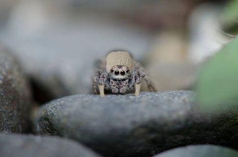 Photos du journal - ChemTec Pest Control | Facebook | Spiders | Scoop.it