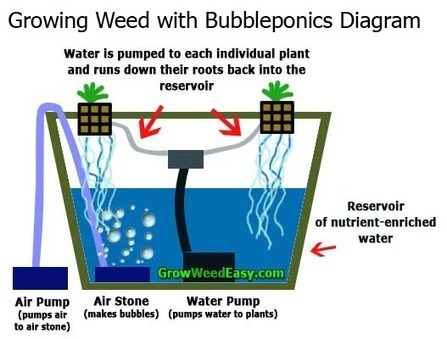 Step By Step Bubbleponics Guide Grow Weed Eas