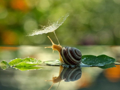 Incredible snail photos reveal the secret life of our mollusc friends - Lost At E Minor: For creative people   Music, Videos, Colours, Natural Health   Scoop.it