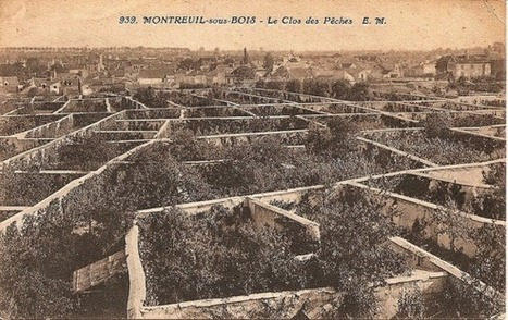 Fruit Walls: Urban Farming in the 1600s   Économie circulaire locale et résiliente pour nourrir la ville   Scoop.it