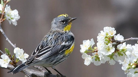 Springtime ignites with melodious birdsong   Interesting Reading to learn English -intermediate - advanced (B1, B2, C1,)   Scoop.it