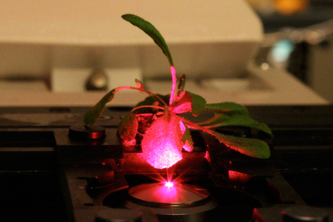 Bionic Plants Offer Superpowered Photosynthesis | Science topics for middle and high school teachers | Scoop.it