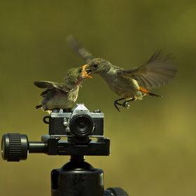 How cute birdies on a  #Pentax camera ! | Scoop Photography | Scoop.it
