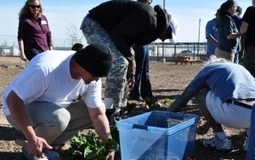 UA Cooperative Extension course teaches community about gardening, nutritional health | Arizona Daily Wildcat | CALS in the News | Scoop.it