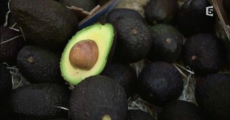 L'avocat, l'or vert qui menace l'environnement en Amérique latine | Biodiversité | Scoop.it