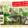 Foie gras - Revue de presse L214