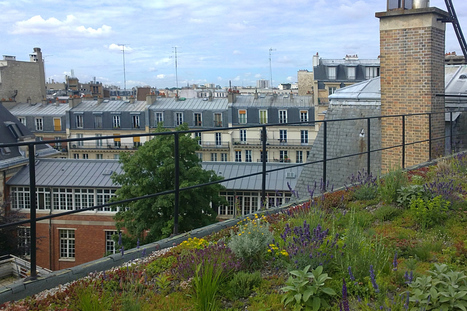 Chickens on the balcony, tomatoes on the roof - France discovers urban agriculture | The Next Edge | Scoop.it