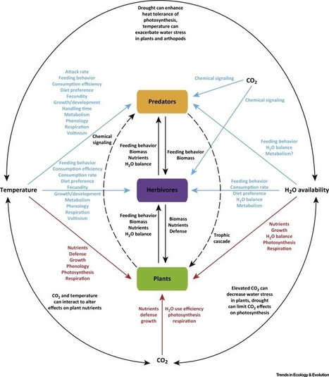 Climate Change, Nutrition, and Bottom-Up and Top-Down Food Web Processes | Plant Gene Seeker -PGS | Scoop.it