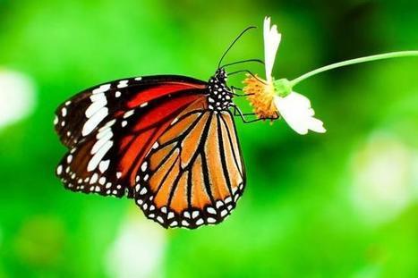 'Habitat-enhanced' vineyards are good for butterflies - UPI.com | Earth Rangers' Science Content | Scoop.it