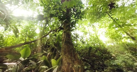 Never Been to the Jungle? Check Out This Wild 360-Degree Video   iScience Teacher   Scoop.it