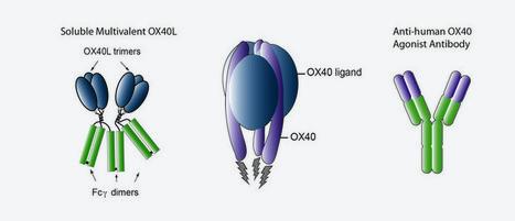 AgonOx Medimmune (MEDI 6383) immunotherapy OX40