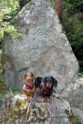 Discovery of a Dog-friendly Japanese Garden | Japanese Gardens | Scoop.it