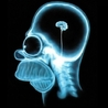 Neuroéducation