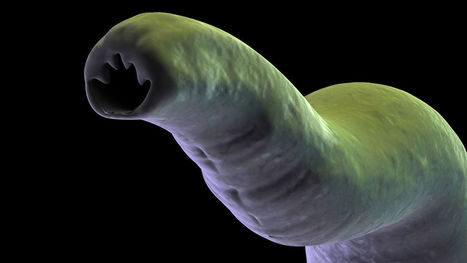 Protein found in hookworm 'soup' could fight asthma, other autoimmune diseases | Science And Wonder | Scoop.it