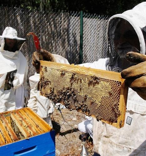 Les apiculteurs du Languedoc-Roussillon ne font plus leur miel - Journal La Marseillaise   Abeilles, intoxications et informations   Scoop.it