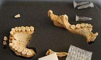 Neanderthals used plants for medicine | Aux origines | Scoop.it