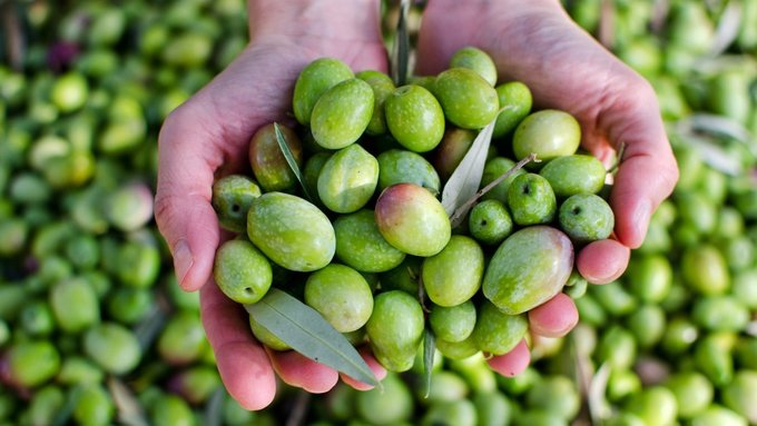 Mediterranean drought sends olive oil prices surging