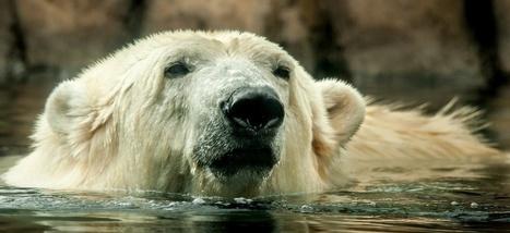 En Alaska, des animaux disparaissent mystérieusement | Biodiversité & Relations Homme - Nature - Environnement : Un Scoop.it du Muséum de Toulouse | Scoop.it