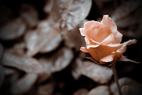 Hochzeitsgedichte In Liebesgedichte Gedichte Für Deinen