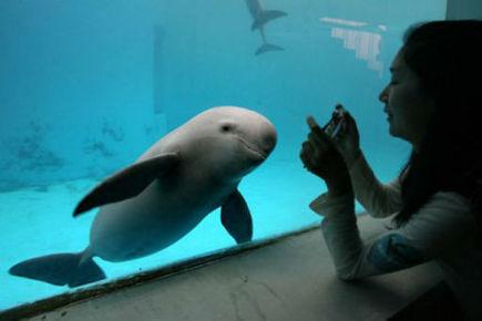 Desperate bid to save Yangtze river dolphin   Dolphins   Scoop.it