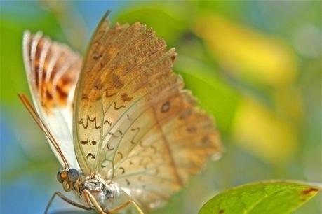 Dis... il est où mon papillon ? | Informatique | Scoop.it
