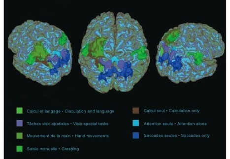 Les quatre piliers de l'apprentissage, ou ce que nous disent les neurosciences | apprendre - learning | Scoop.it